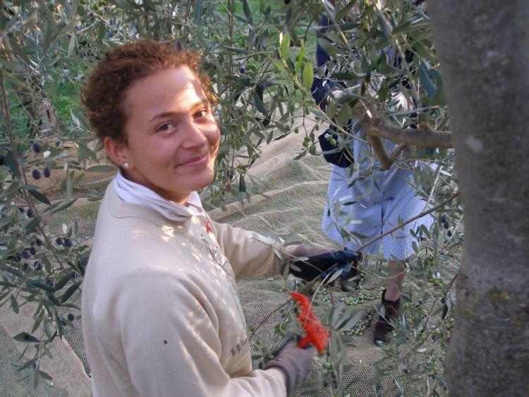 Viriginia zbiera oliwki