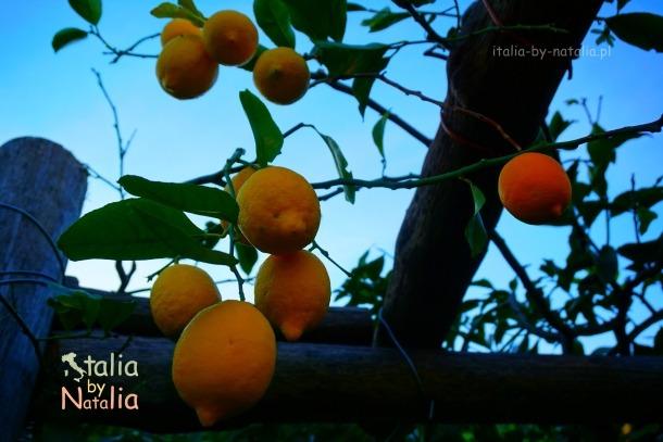 ravello-ogród-cytrynowy