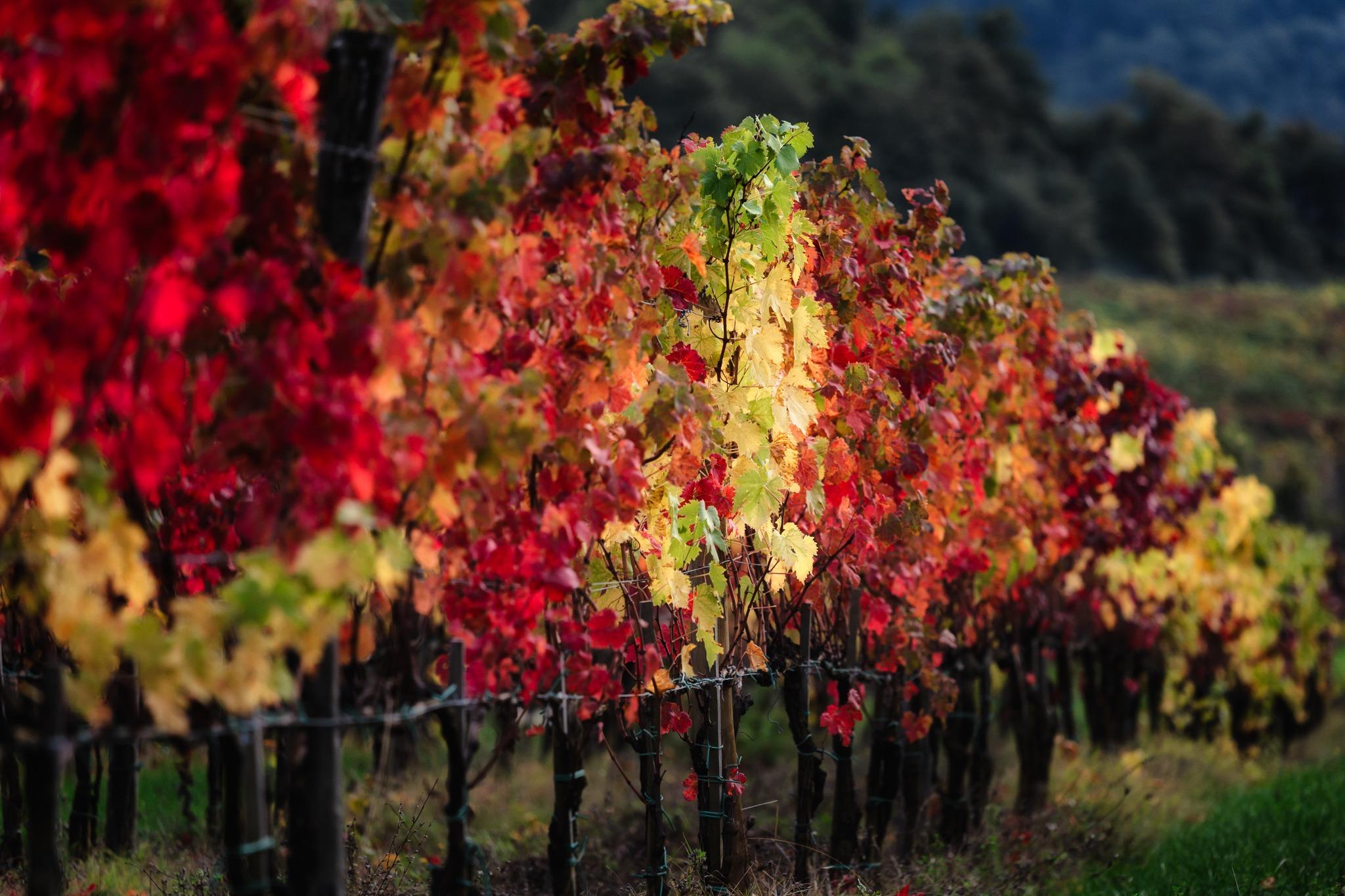 Castellina-in-Chianti-pazdziernik-toskania-jesien