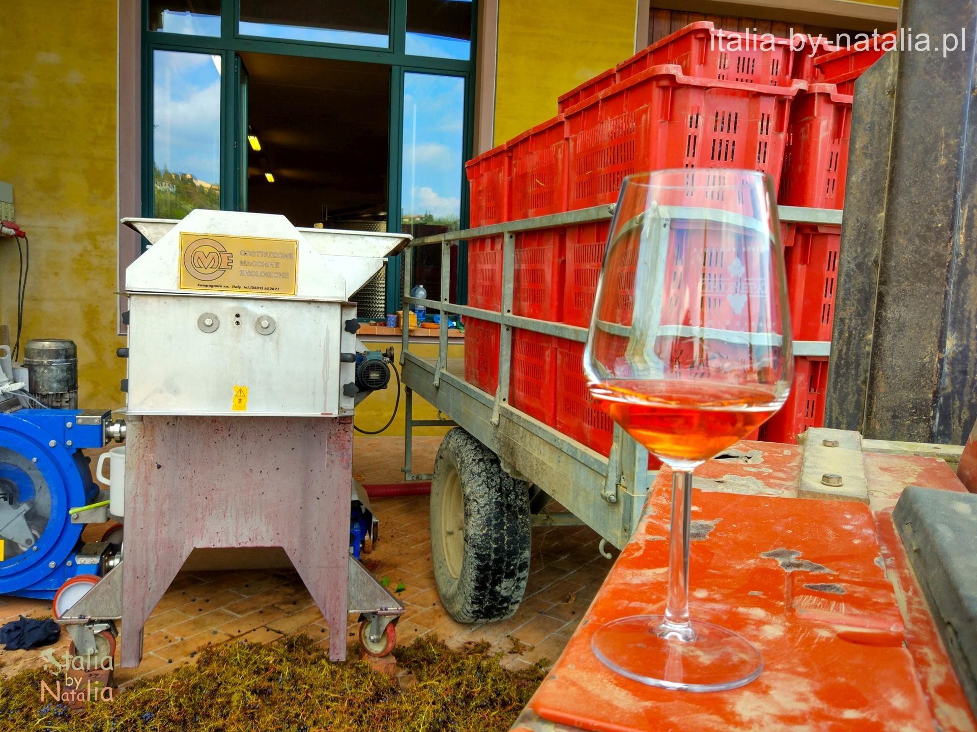 castelvecchio toskania jesienią winnica winobranie