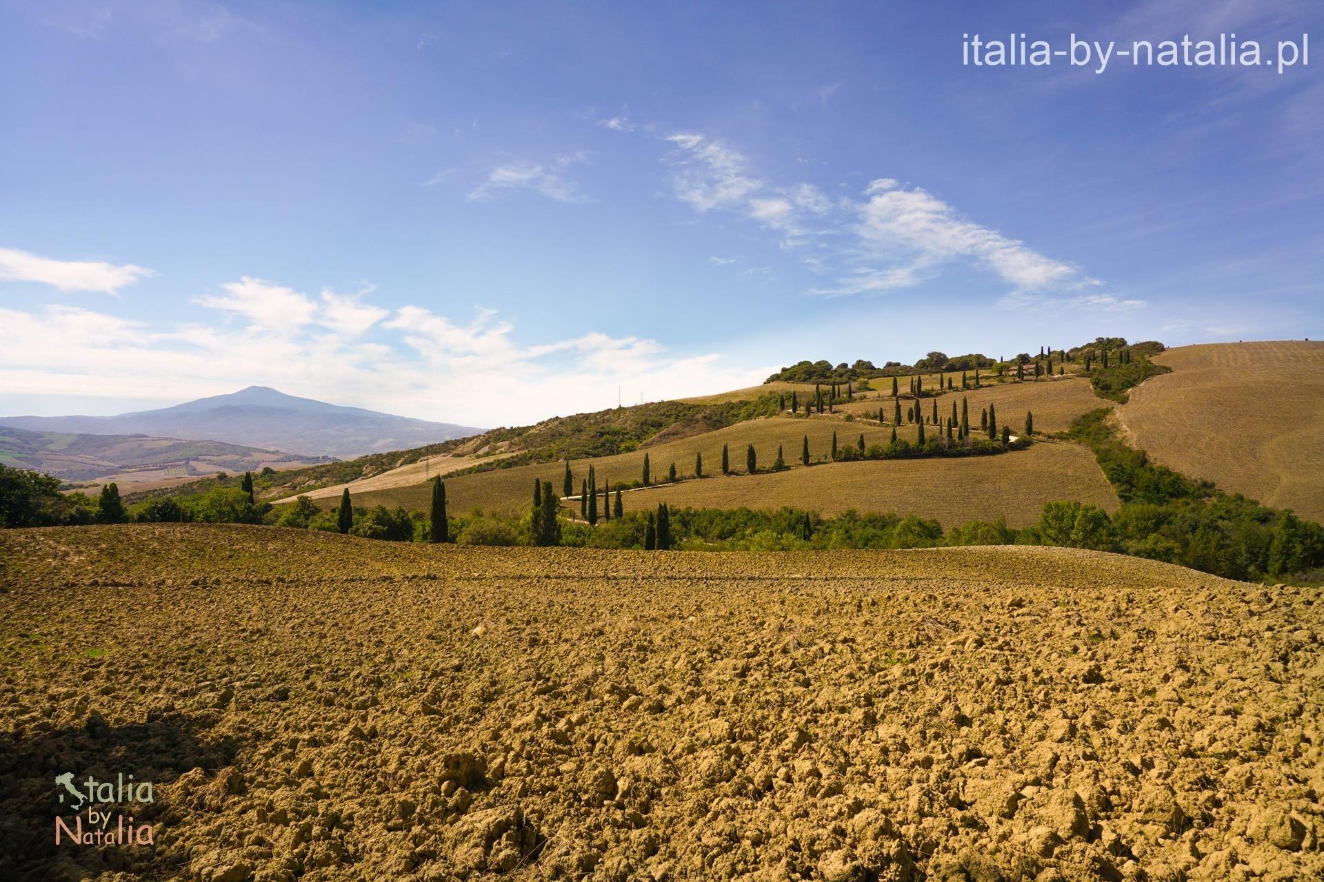 La Foce zawijaniec cyprysowy jesień Val di Orcia Toskania jesienią