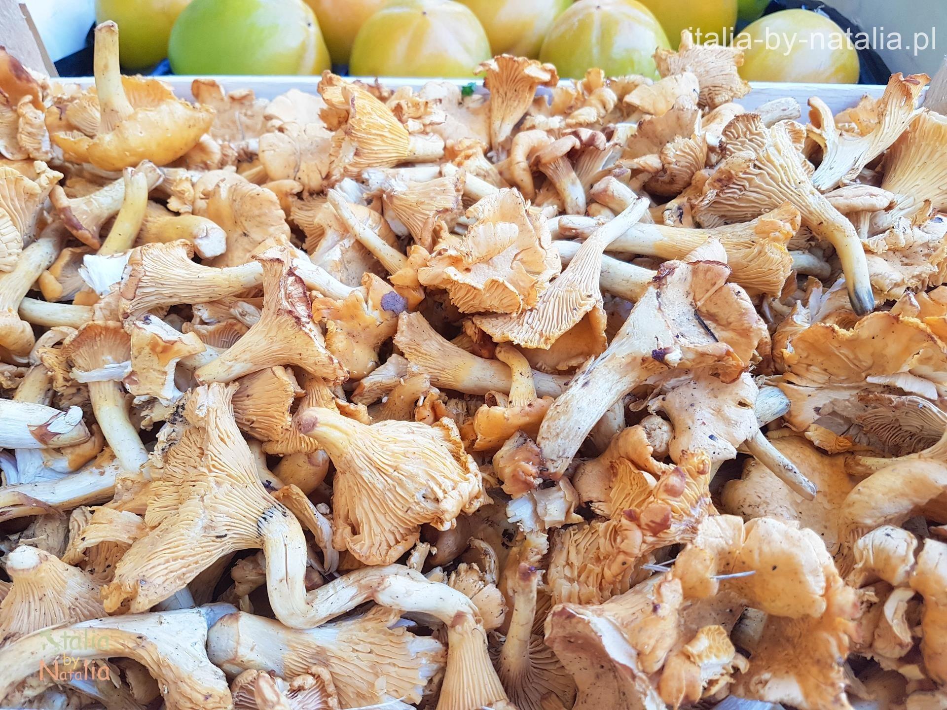 kurki grzyby włochy jesień Toskania jesienią