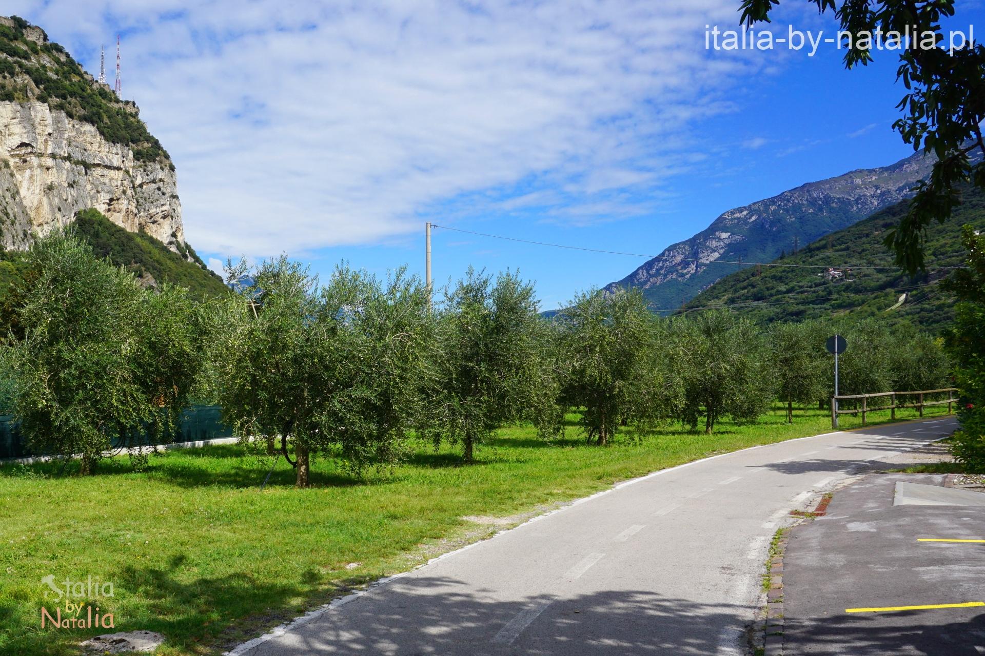 Dolina Rzeki Sarca Jezioro Garda drzewa oliwne