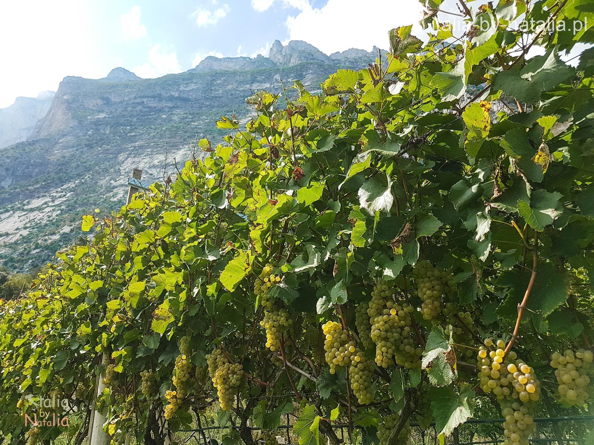 winica Trentino Sarca Riva del Garda Dro Arco góry