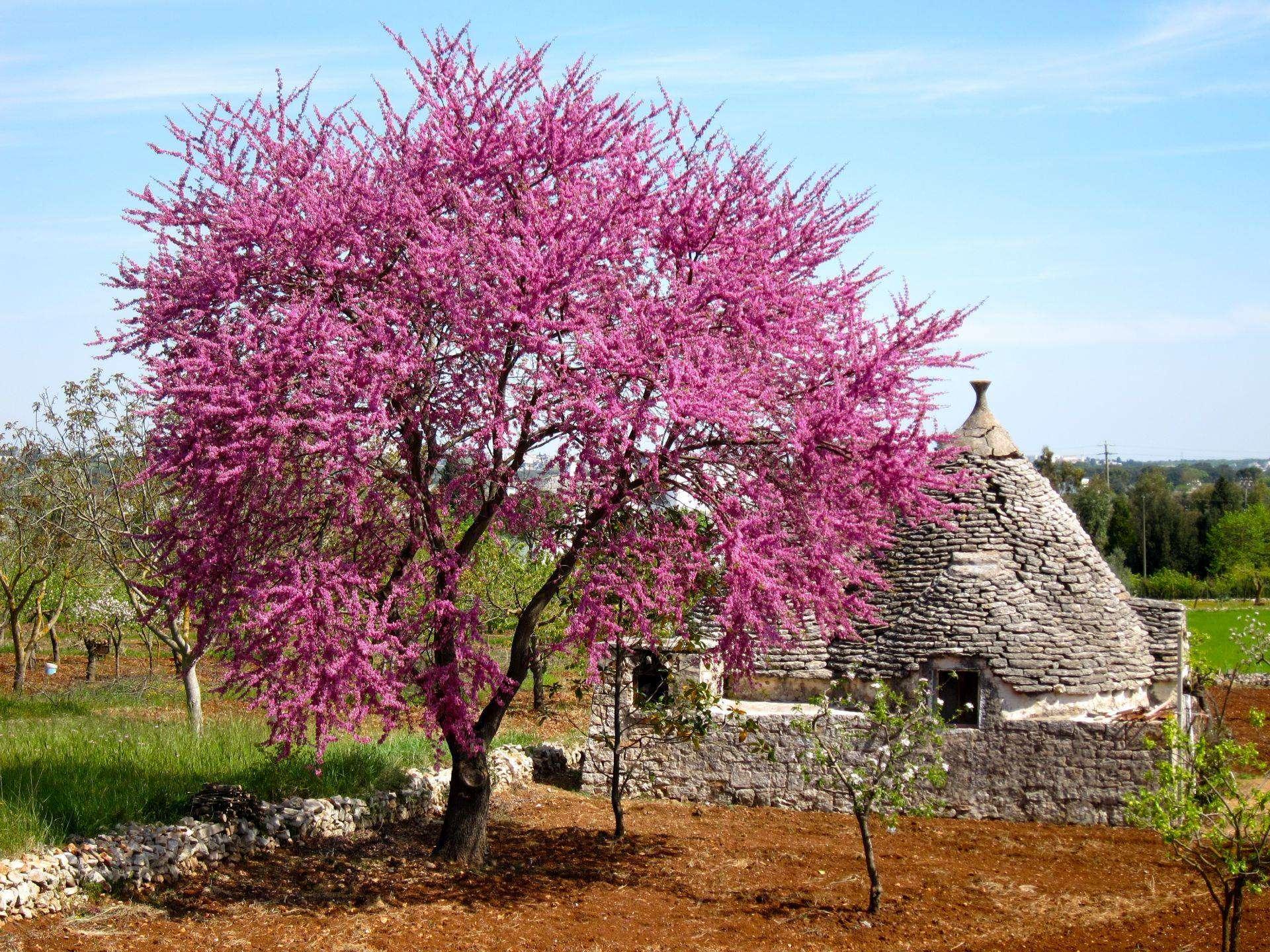 Alberobello kwiecien Apulia kiedy jechać do apulii i bazylikaty