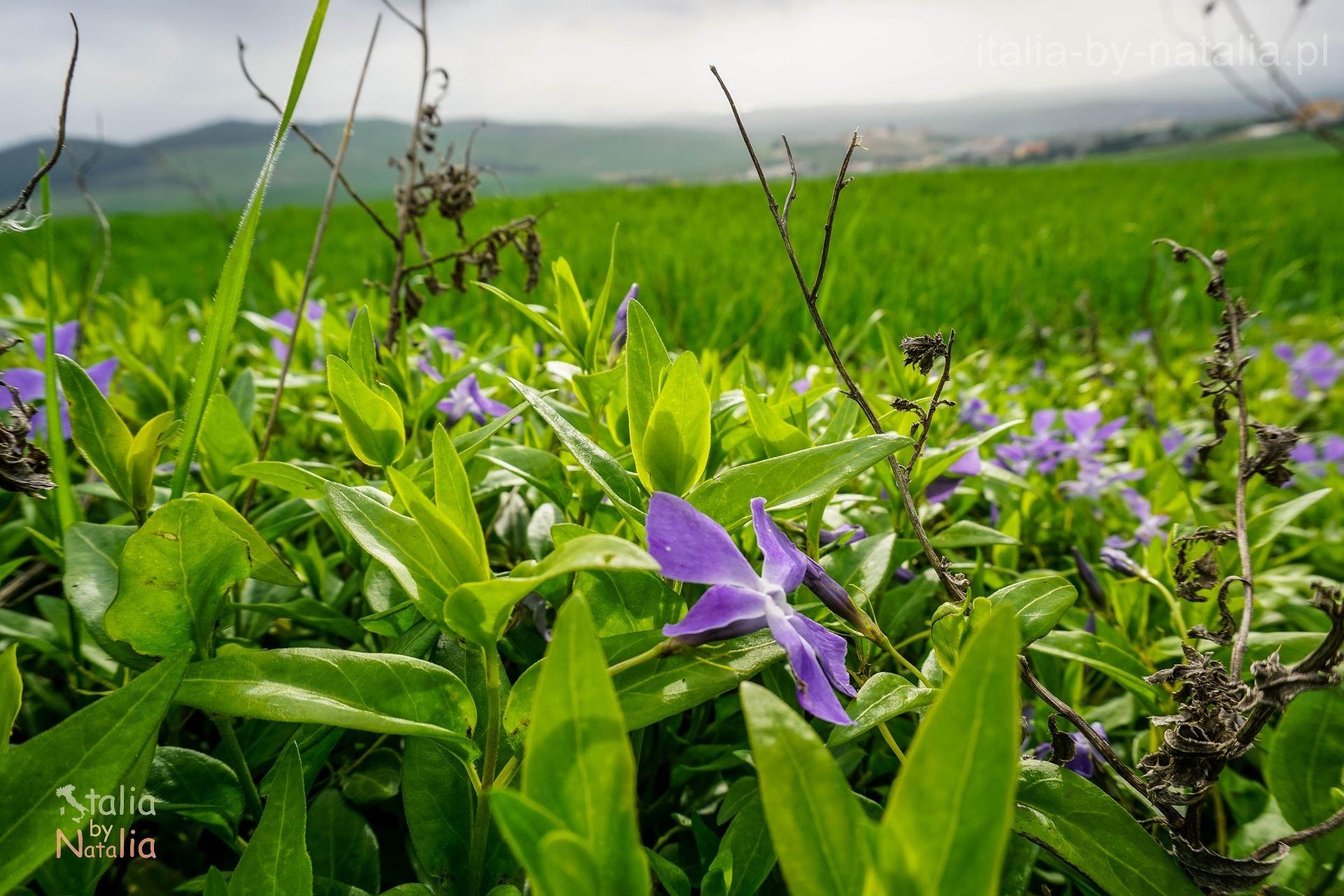 Matera wiosna marzec Bazylikata
