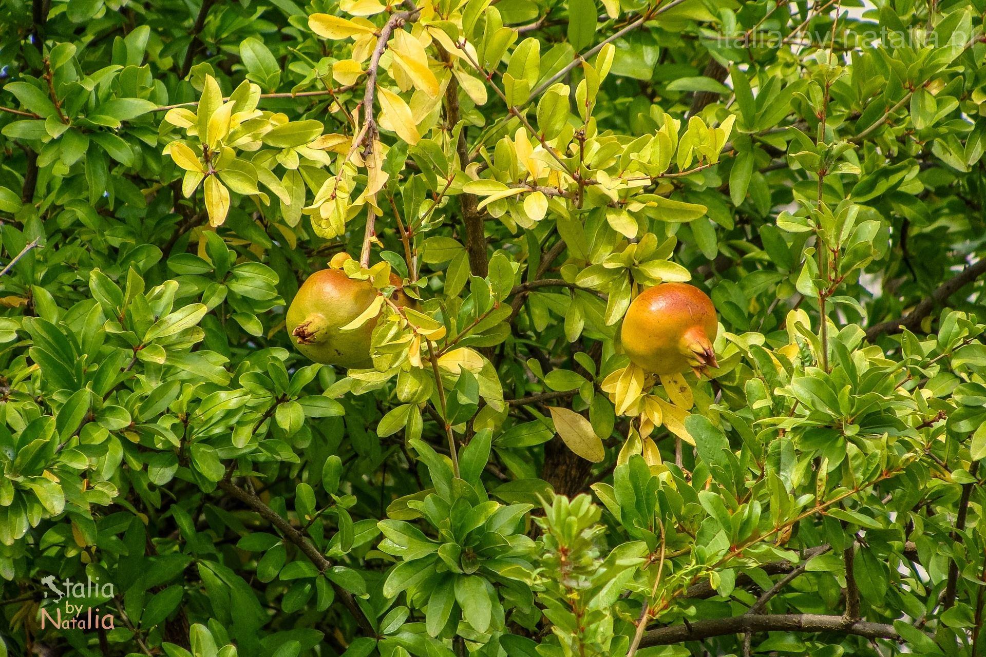 matera bazylikata wrzesien kiedy jechać do apulii i bazylikaty
