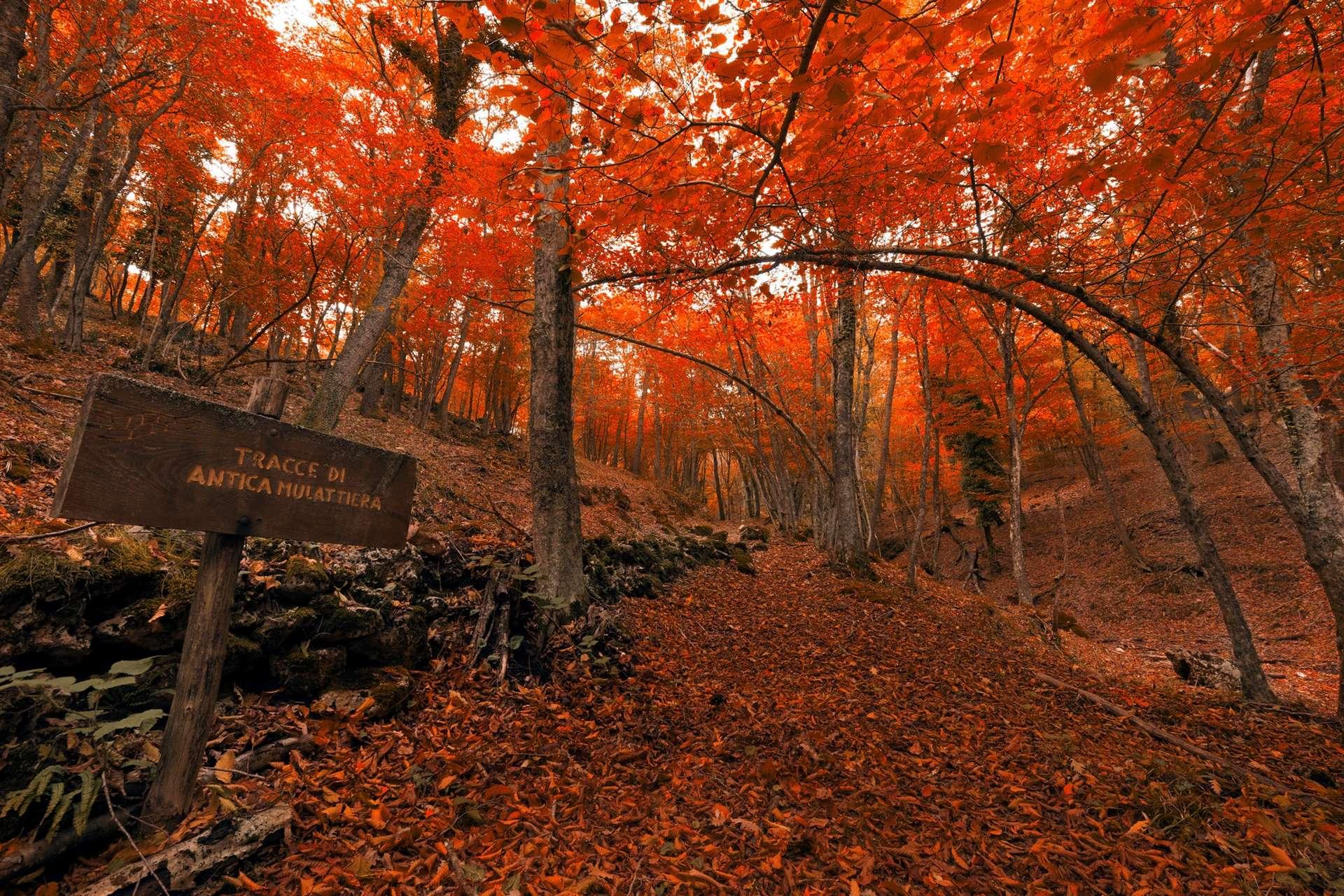 Gargano Foresta Umbra październik kiedy jechać do apulii i bazylikaty