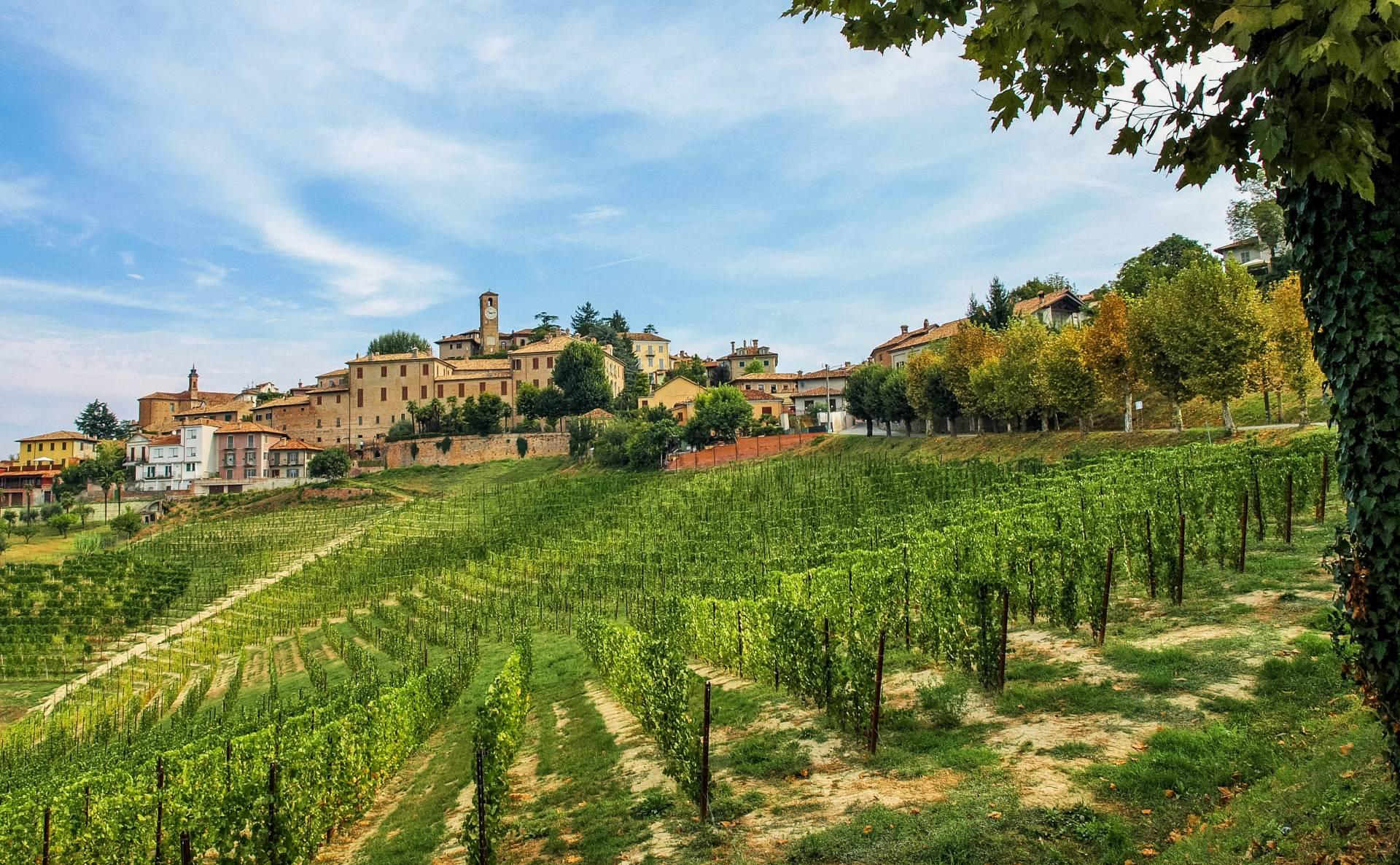 Neive Piemont