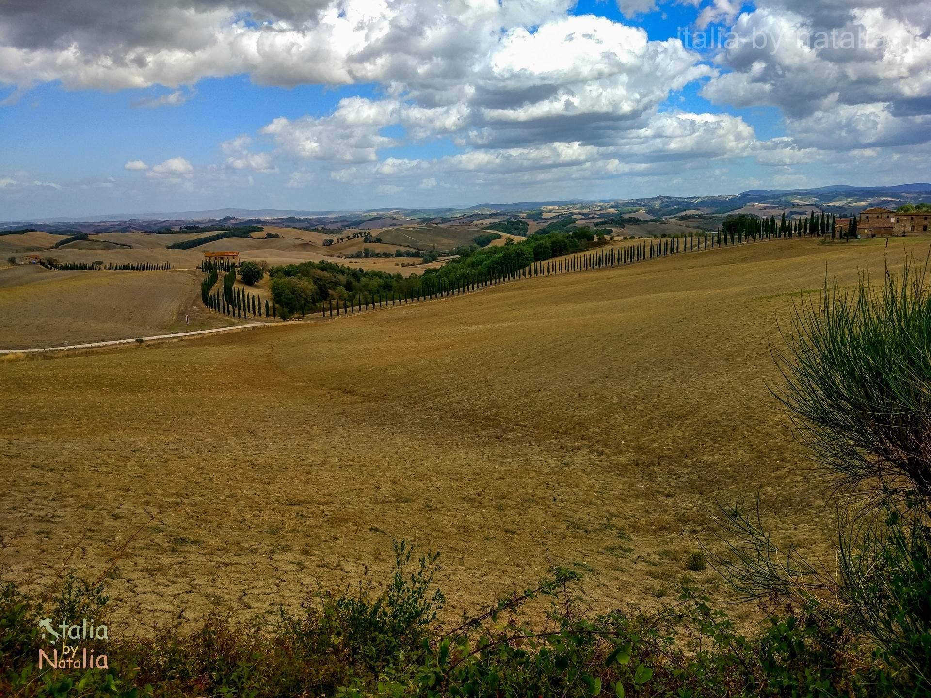 cyprysowa droga Toskania Buonconvento punkt widokowy panorama cyprysowe drogi toskanii