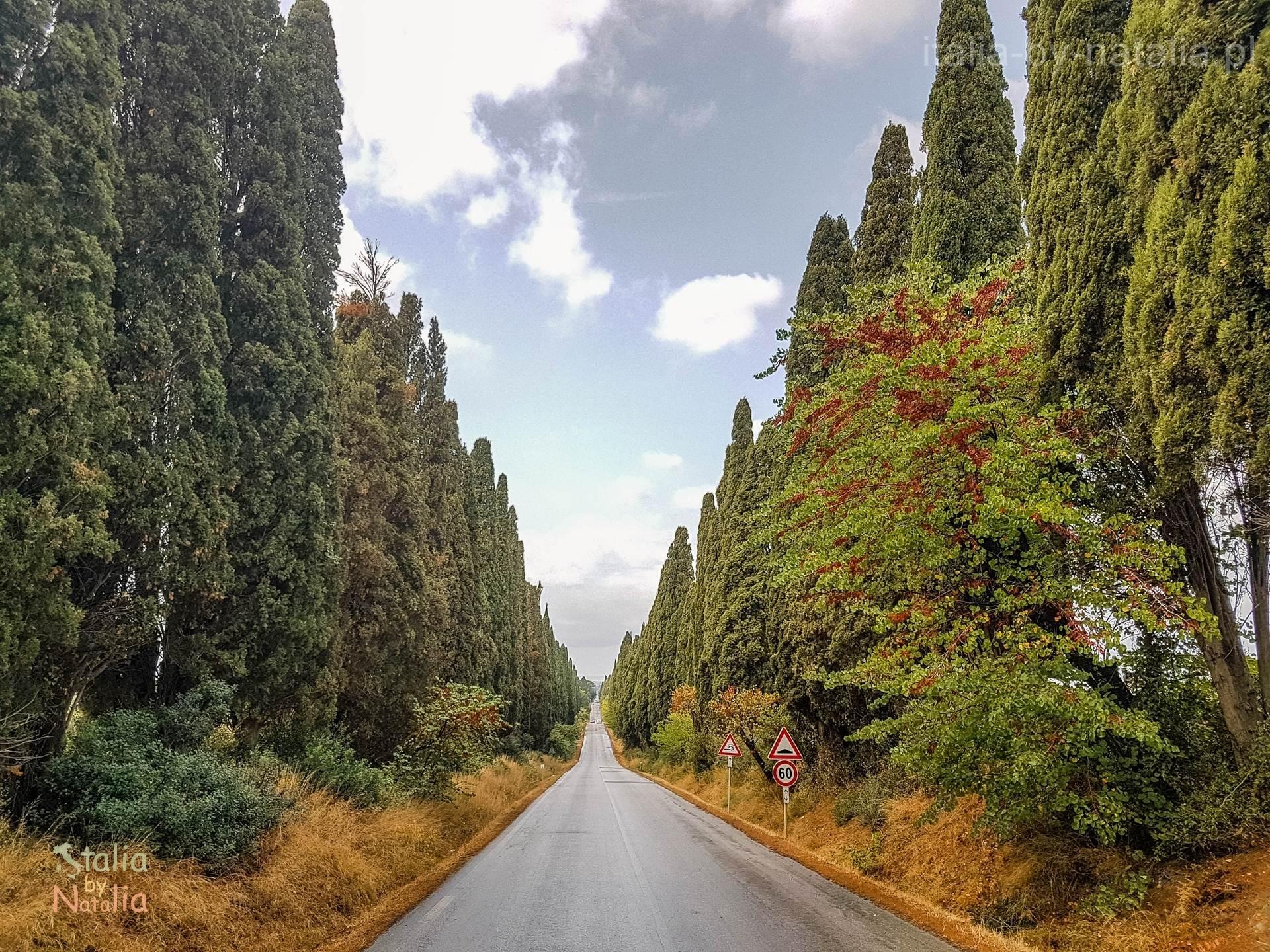 Bolgheri Toskania aleja cyprysowa droga wino cyprysowe drogi toskanii