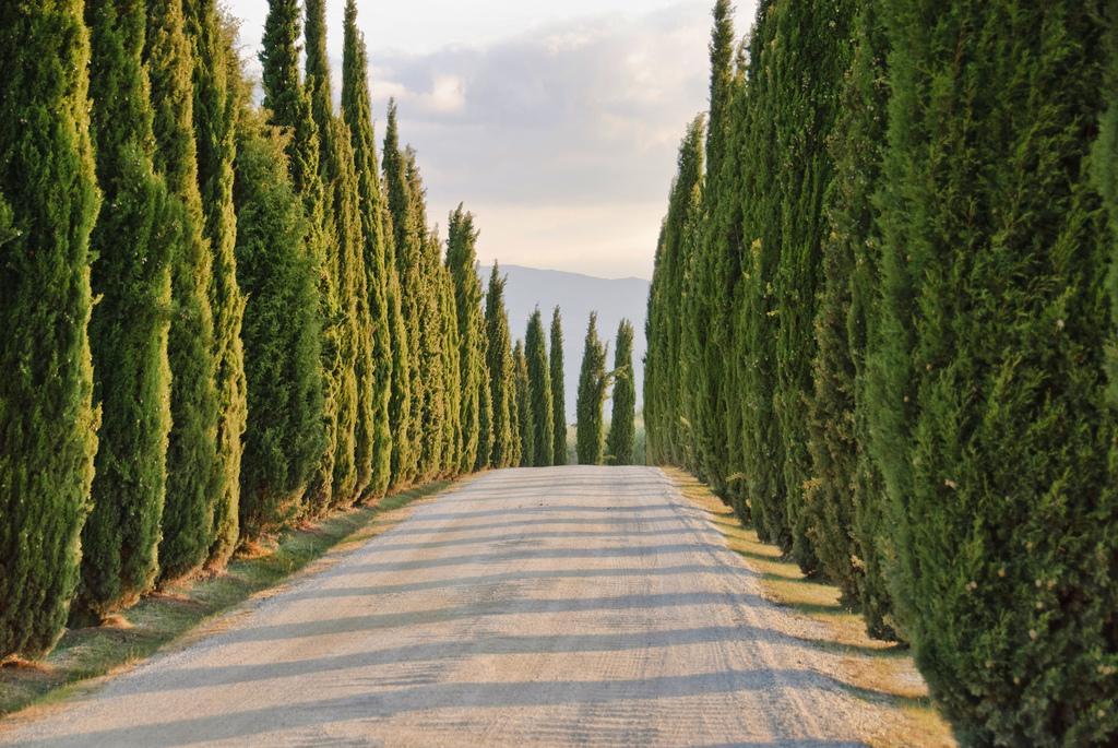 Cyprysowwe drogi Toskania