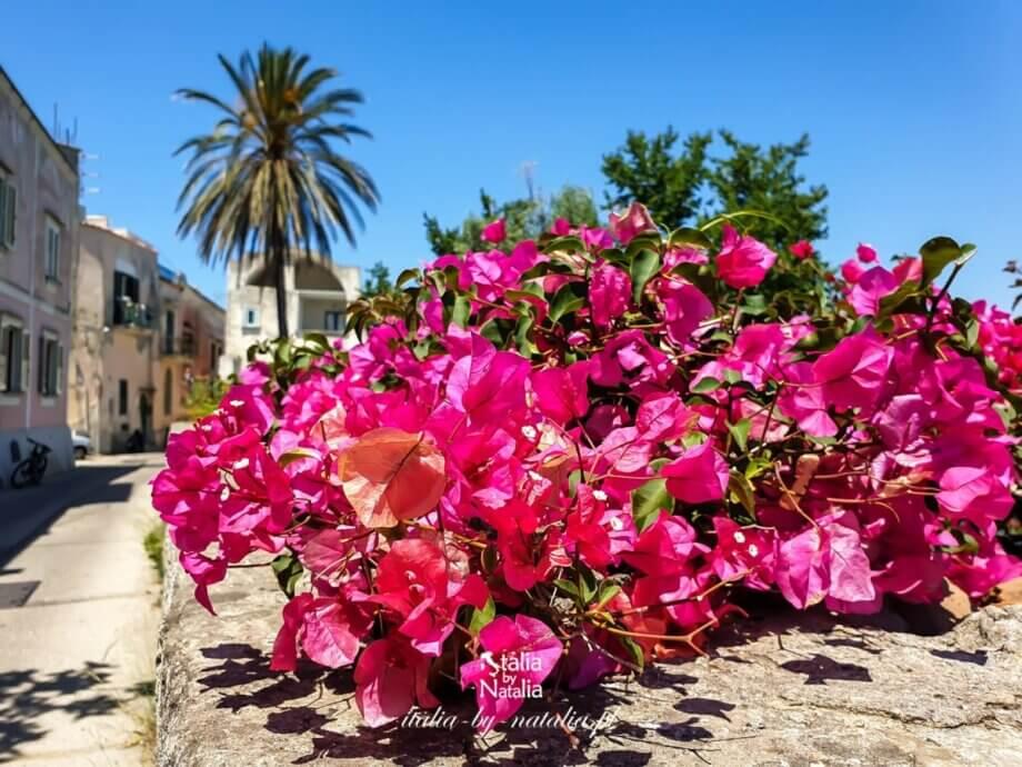 Procida – kolorowa wyspa u wybrzeży Neapolu. Przewodnik